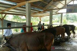 Distan Mukomuko antisipasi pemotongan sapi betina produktif
