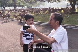 "Jan Ethes jalan pagi bersama ""Mbah Jokowi"""