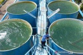 Air payau, Dewan minta Direktur PDAM Tirta Khatulistiwa dicopot
