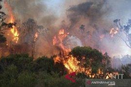 Polisi Dalami Kebakaran Lahan Di wilayah Petung-Giripurwa