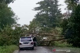 Pohon tumbang halangi Jalinsum Gunung Tua - Pal XI