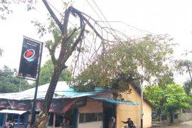 Gerak cepat PLN Kalbar atasi gangguan akibat angin puting beliung