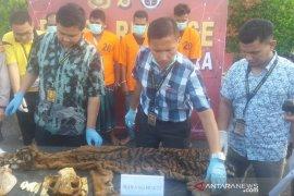 Sindikat perdagangan kulit harimau terbongkar, 5 pria ditangkap