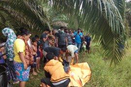Warga Langkat temukan mayat di perkebunan kelapa sawit