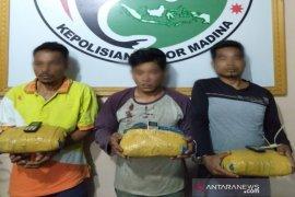 Tiga bal ganja bersama pelaku diamankan polisi di Kayu Laut