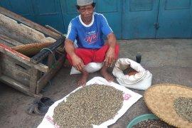Kemarau, permintaan kopi asal Lebak cenderung meningkat