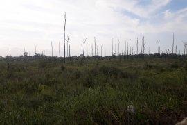 DPRD Bangka Tengah minta status hutan kota diubah jadi taman