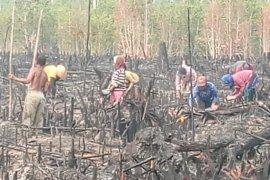Pemkab Bangka jadwalkan musim tanam padi petani