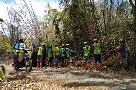 PLN siap terangi hutan tertua di Pulau Jawa akhir Oktober 2019