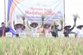 Petani Aceh Tamiang hasilkan tanaman padi empat  ton/hektare