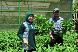 75 hektare lahan di pantai timur Surabaya siap ditanami mangrove