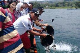 Samosir tebar ribuan bibit ikan nila di Danau Toba