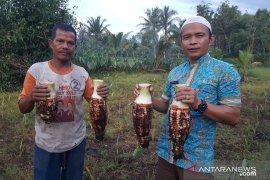 Singkawang bidik Malaysia untuk pasar keripik produksi UMKM