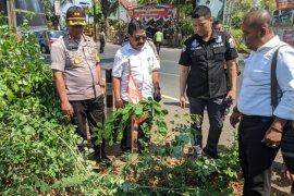 Polres Tulungagung tetapkan dua tersangka pembalakan pohon sonokeling