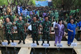 TNI tanam 300.074 bakau dari Sabang sampai Merauke