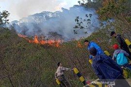 Hutan Gunung Papandayan di Garut terbakar, petugas gabungan berupaya padamkan api