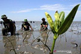 Penanaman Mangrove HUT TNI Page 2 Small