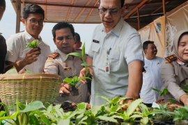 Produk hortikultura  enam kabupaten tembus pasar ekspor