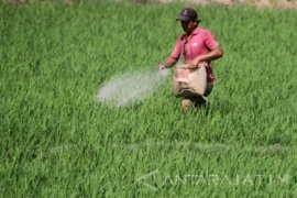 Petrokimia Gresik minta petani gunakan pupuk berimbang