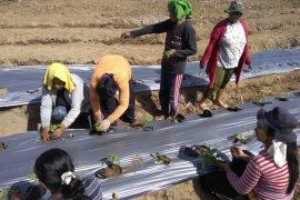 Dinas ESDM  Malut berupaya ciptakan iklim investasi di bidang pertambangan