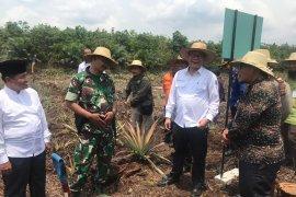 BRG sulap ladang api Rupat jadi sumber ekonomi