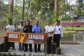Banjarbaru miliki Edupark Rusa Sambar