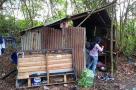 Satu keluarga tinggal di gubuk beralaskan tanah di Kubu Raya