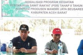 Aceh Barat remajakan 1.300 hektare kebun kelapa sawit senilai  Rp32,5 M