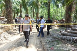 Forestry closes all routes of illegal logging