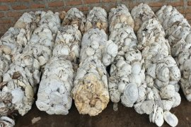 Hingga September, penurunan ekspor karet Sumut masih berlanjut