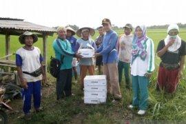 Mukomuko bantu petani tanggulangi  ulat perusak hektaran tanaman padi