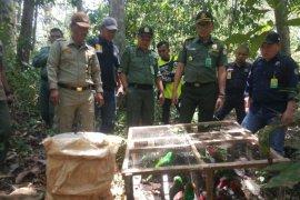BBKSDA lepasliarkan 25 ekor satwa dilindungi hasil sitaan