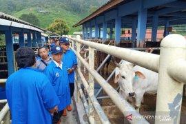 Pemkab Bangka pelajari teknologi pengembangan ternak sapi