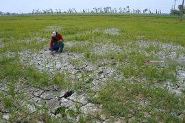 Realisasi asuransi usaha tani di Madiun capai 16.000 hektare
