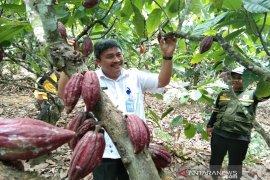 HPS di Sultra dorong produktivitas kakao-sagu