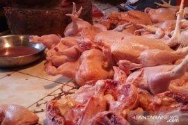 Harga ayam Rp40 ribu per kilogram di Pontianak