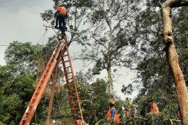 Bencana angin kencang, 10 gardu listrik di Kota Batu mulai menyala