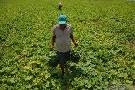 Akademisi apresiasi capaian pertanian Indonesia lima tahun terakhir