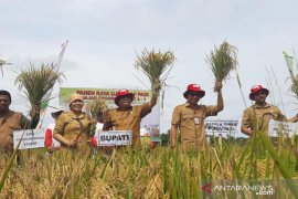 Kolaborasi mampu dorong tingkatkan produktivitas padi di Kubu Raya