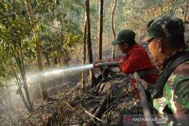 Kebakaran hutan pinus Gowa Page 2 Small