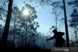 Kebakaran hutan pinus Malino Page 1 Small