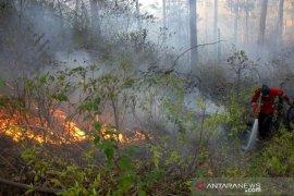 Kebakaran hutan pinus Malino Page 2 Small