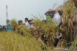 Padang Panjang dan Kodim 0307/Tanah Datar panen padi demplot Bios 44