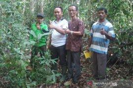 Alasan kawasan hutan Mentawir ditetapkan lokasi pelaksana Proklim