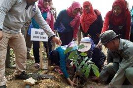 KPH Kusan selamatkan hutan di Tanah Bumbu