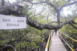 Semakin Menarik, Taman Wisata Mangrove Bakal Dilengkapi Menara Pantau