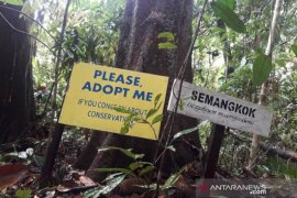 Program Pohon Adopsi Hutan Bukit Bengkirai
