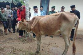 Dongrak ekonomi petani Aceh Barat bantu 20 ekor ternak