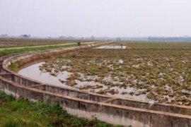 Petani Tanjabbar sambut hujan dengan menanam padi
