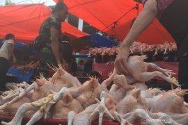 Harga ayam potong naik hingga Rp55.000 per ekor
